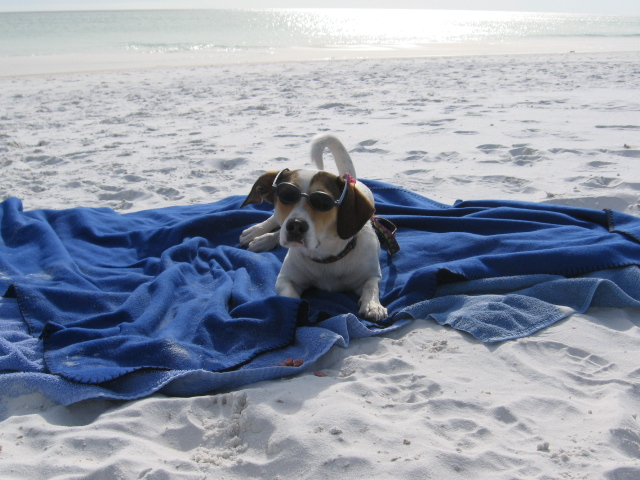 Destin, FL condo rental spotlight Bring your pets!
